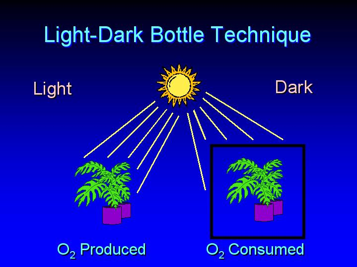 light dark bottle method